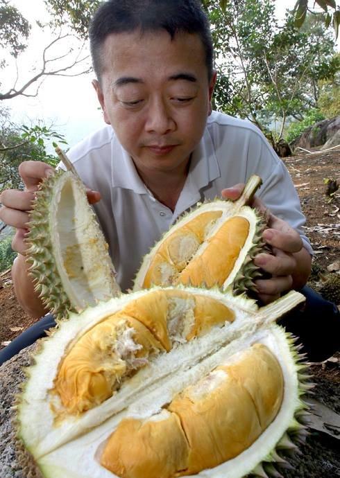 Durian Seng of Bao Sheng Durian Farm