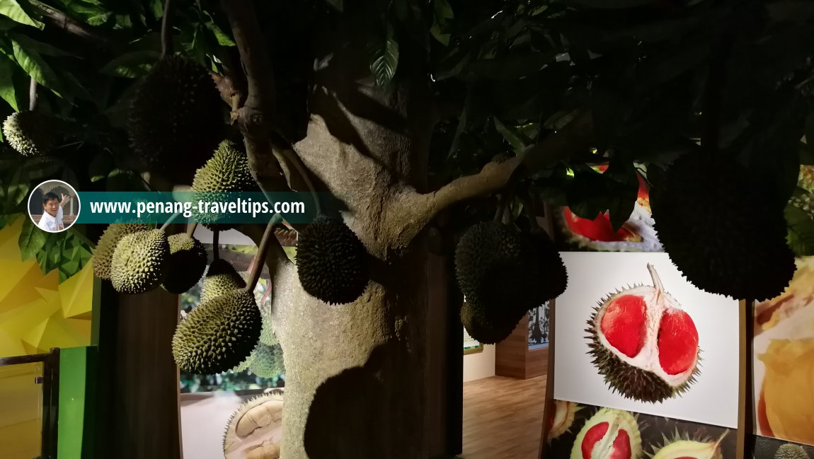 Durian - The King of Fruits, The TOP, Komtar, Penang