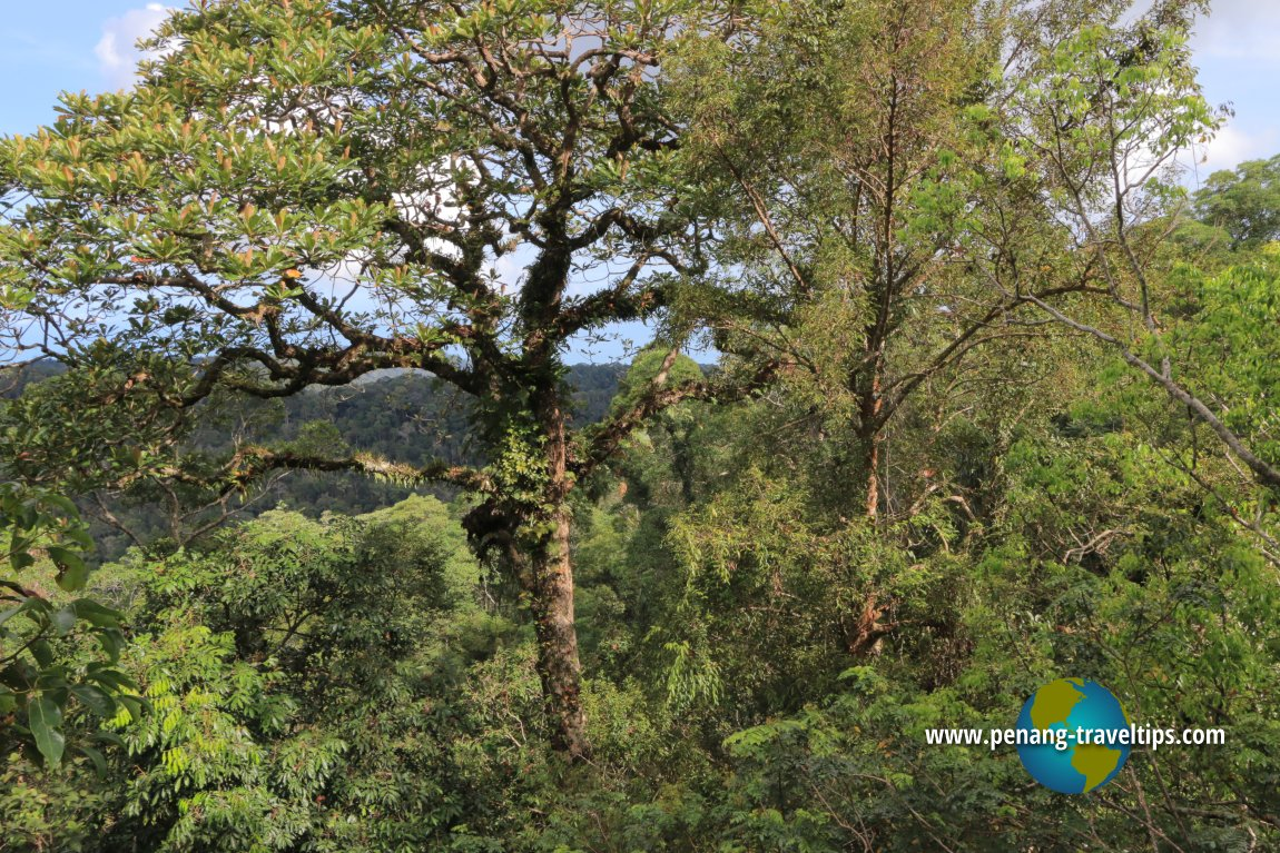 Langur Way Canopy Walk