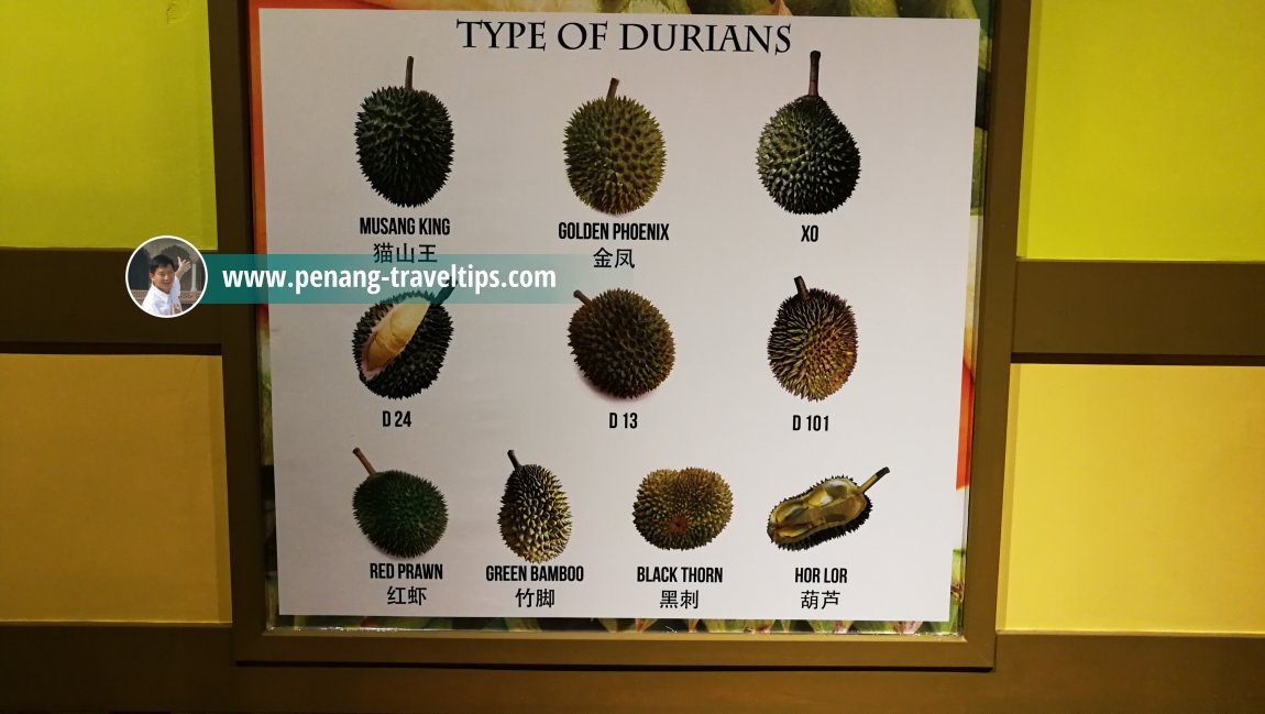 Types of Durians