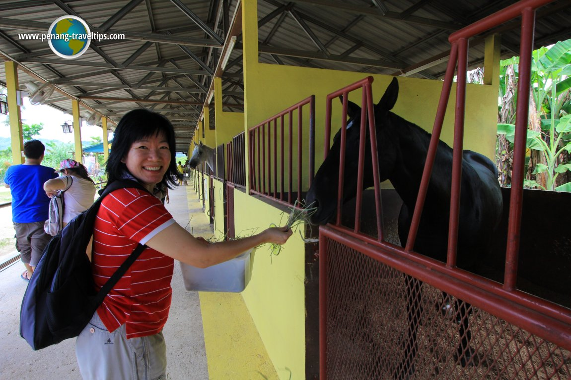 Countryside Stables Penang