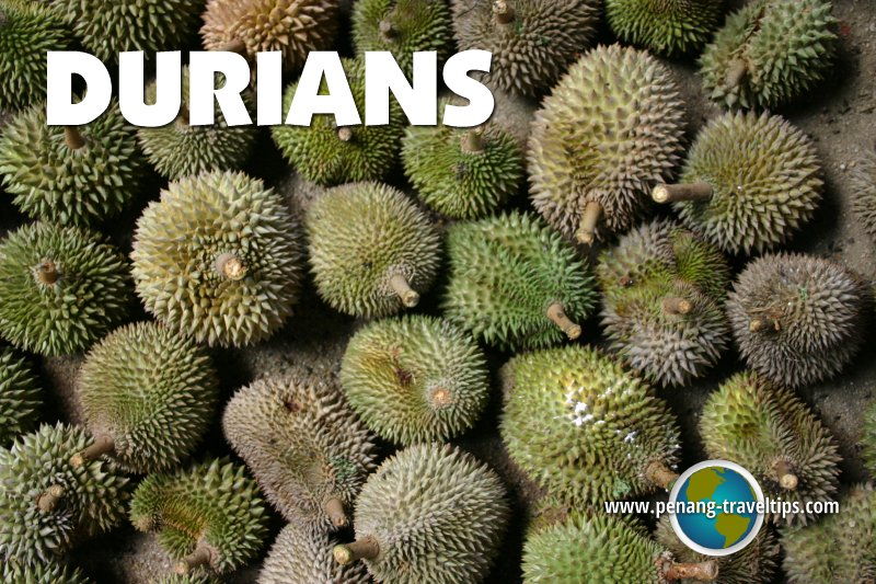 Durian Terms