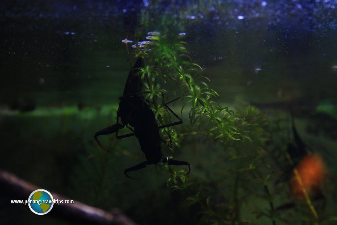 Entopia by Penang Butterfly Farm