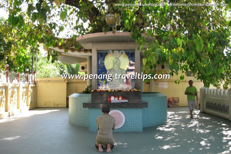 The Mahindarama bodhi tree and shrine