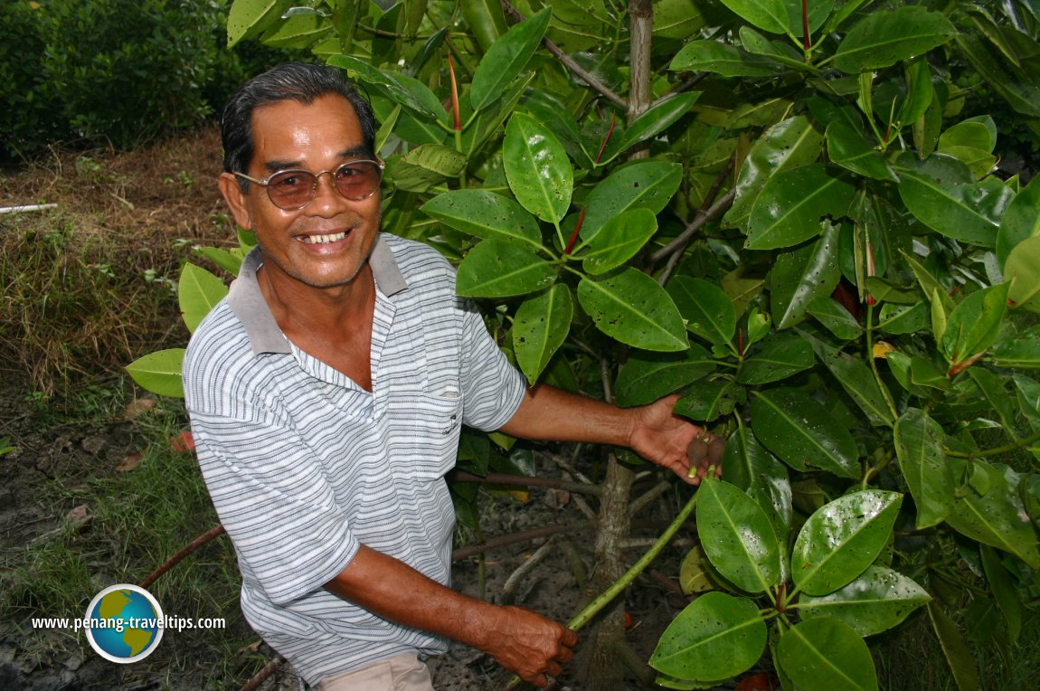 Mangrove replanting programme