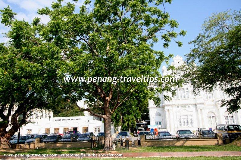 The Sentang tree (Melia excelsa) planted by Tun Haji Sardon, the Governor of Penang, on 1 July, 1978
