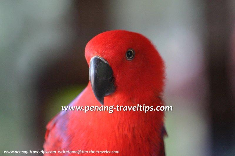 A parakeet at the Penang Bird Park in Seberang Jaya