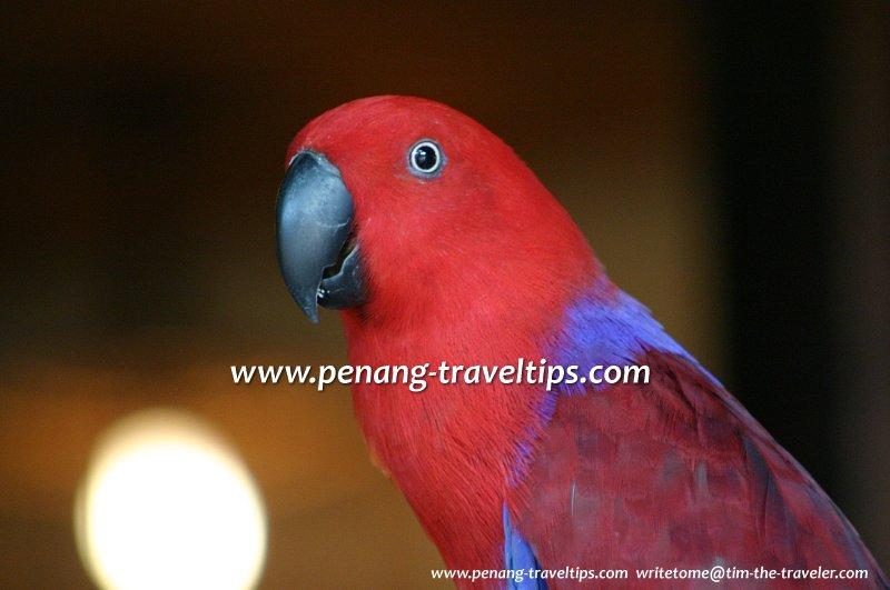 Parrot, Penang Bird Park