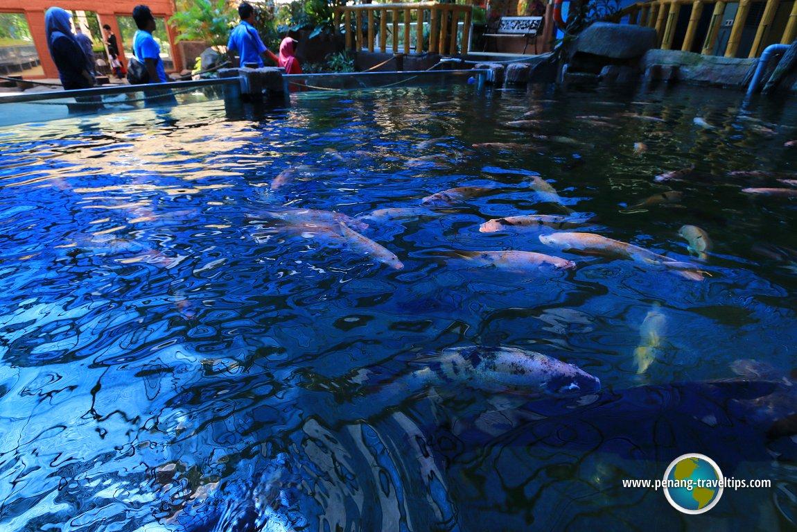 Penang Aquarium Akuarium Tunku Abdul Rahman Batu Maung