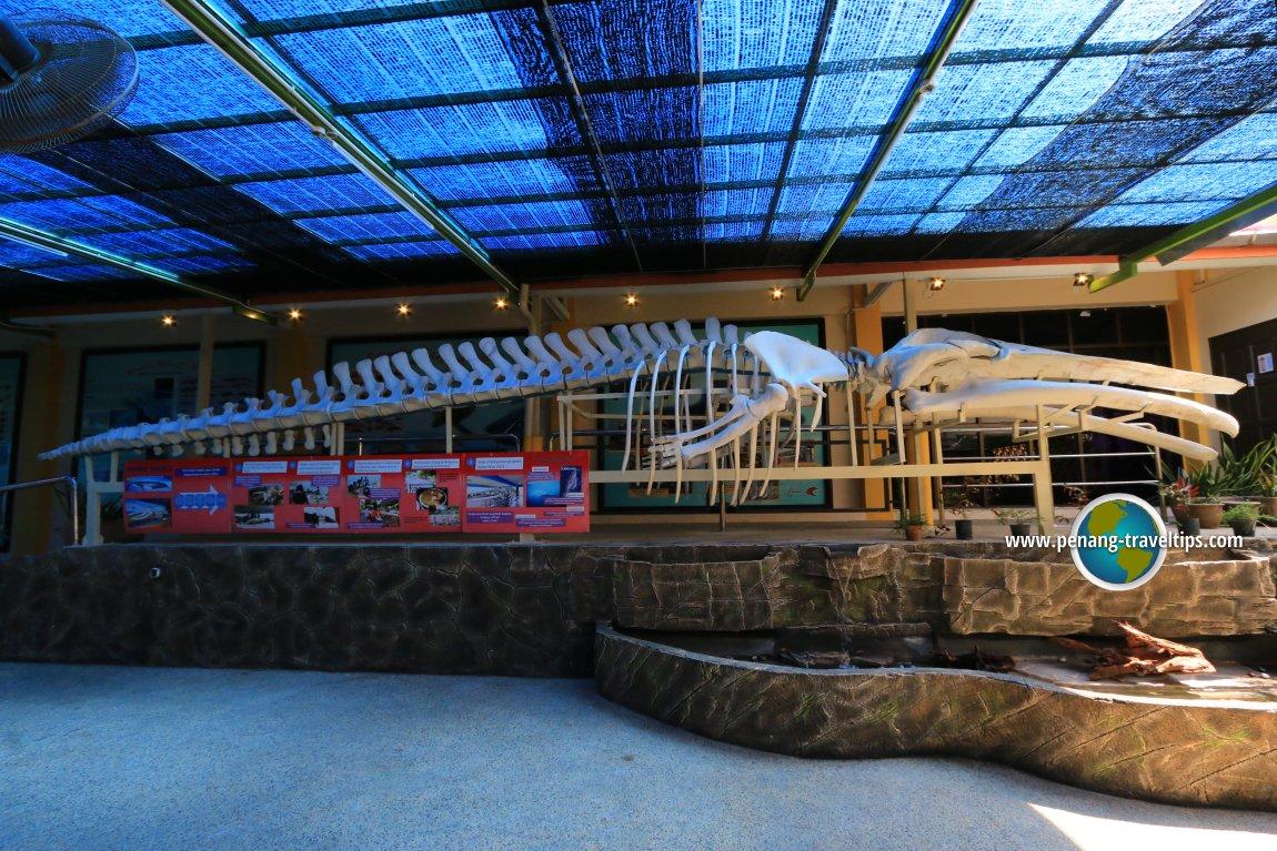 Bryde's Whale, Penang Aquarium