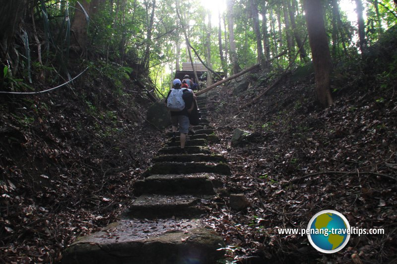 Trekking in the Penang National Park
