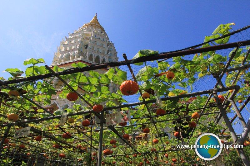Pumpkin garden at Kek Lok Si