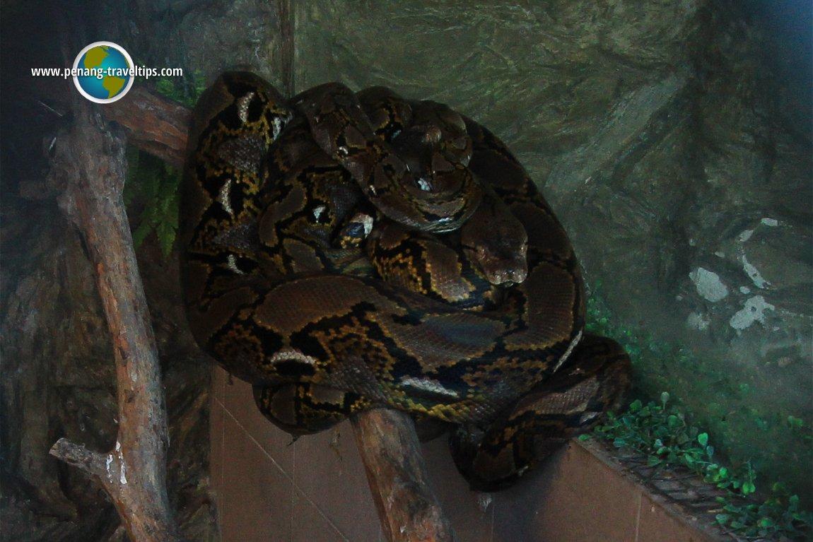 Python, Teong Poh Keong Temple
