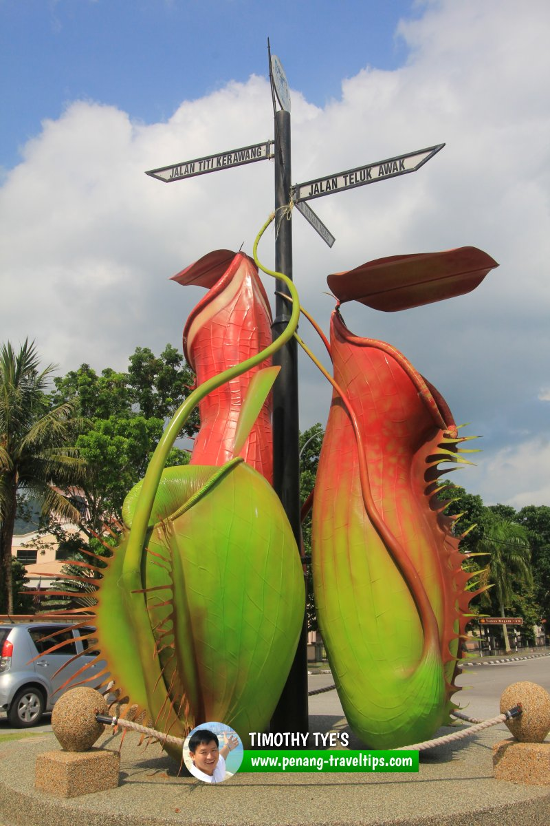 Teluk Bahang Roundabout with N. ampullaria (left), N. gracilis (right) and N. albomarginata (behind)