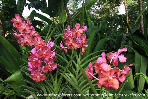 Orchids, Singapore Botanic Gardens