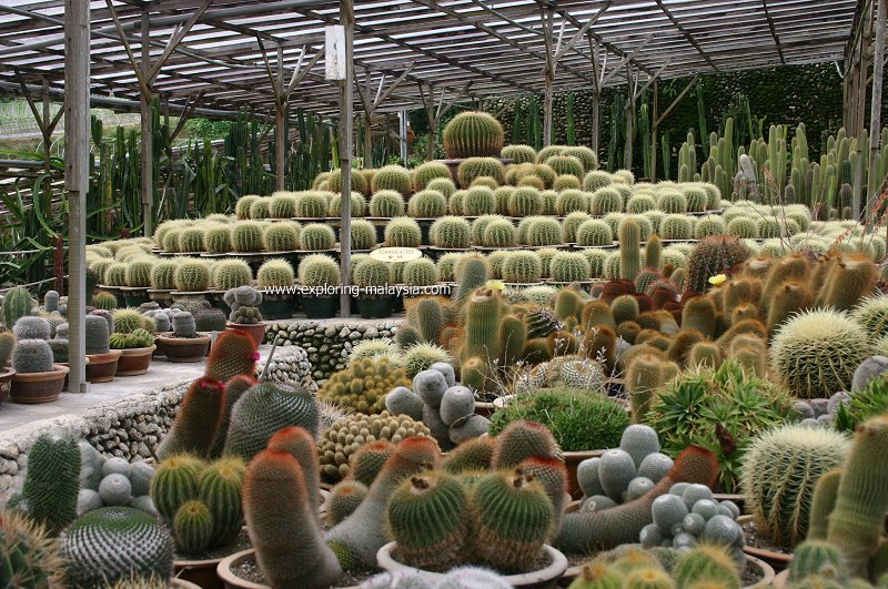 Cactus Valley, Cameron Highlands