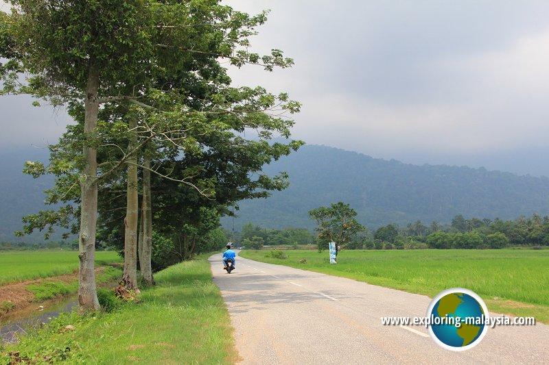 Country lane in Kedah