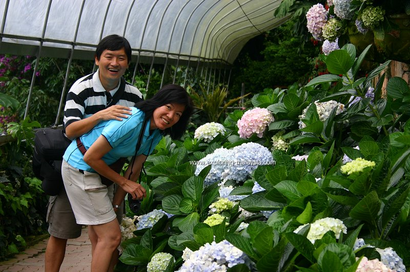 Tim and Chooi Yoke with the hydrangeas in Cameron Highlands