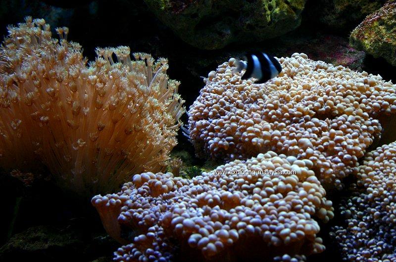 Soft corals, Underwater World Langkawi
