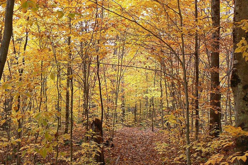 Autumn in La Mauricie National Park, Quebec