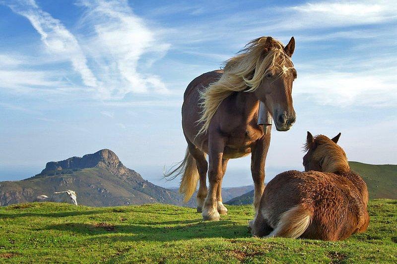 Horses in Bianditz Mountain, Navarre, Spain