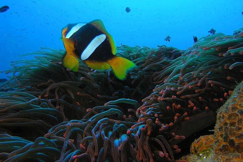 Soft corals off Mohéli, Comoros