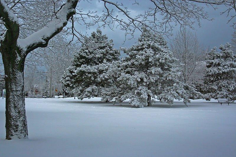 Dentonia Park, Toronto, in winter