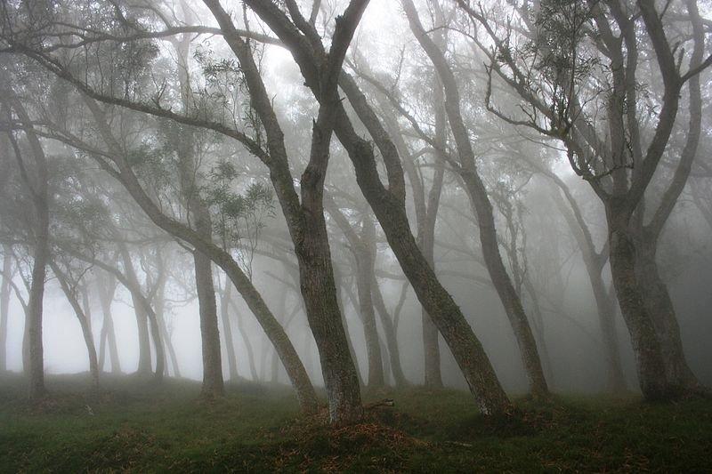 Forêt des Hauts-sous-le-Vent, Réunion