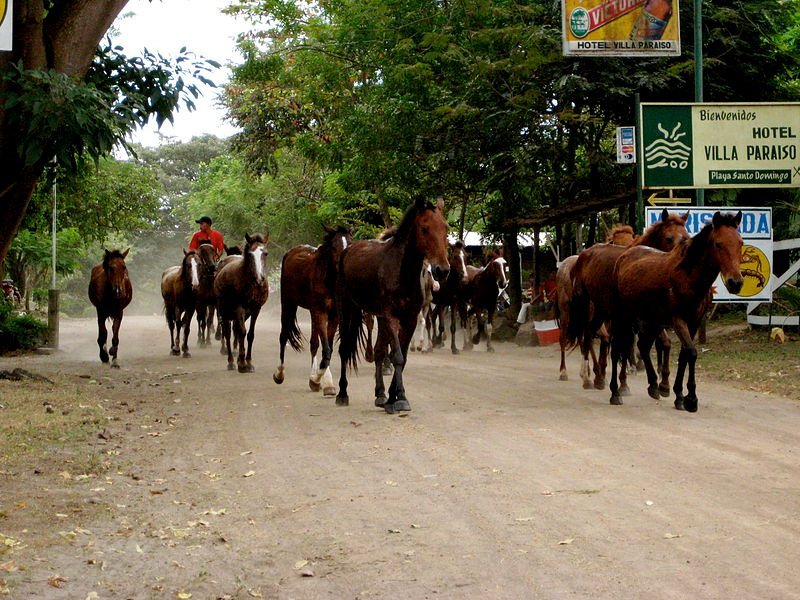 Horses on Ometepe Island, Nicaragua