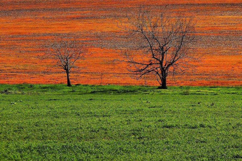 Landscape in Israel