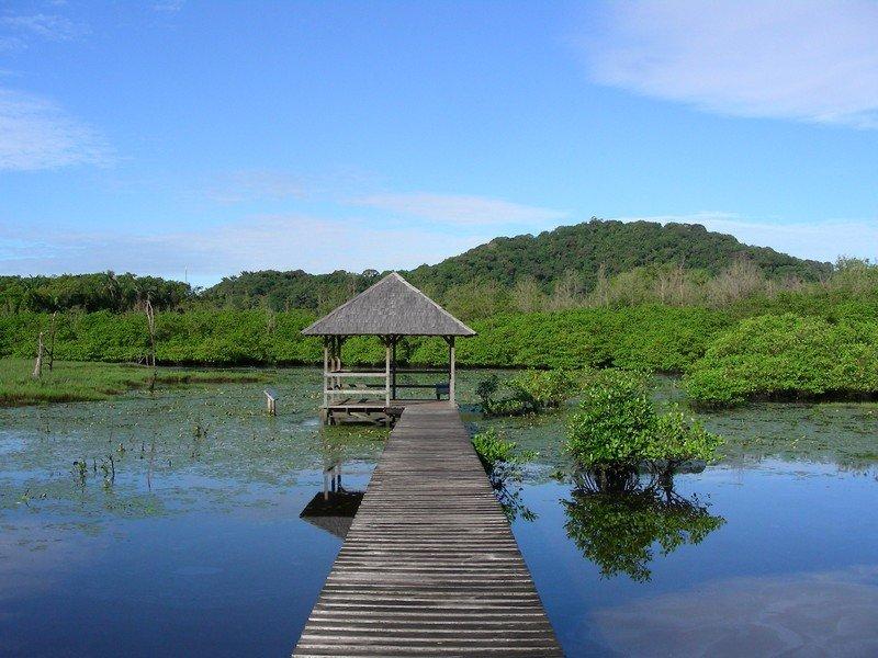 Montjoly wetlands, French Guiana