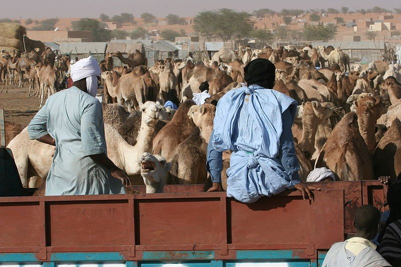 Nouakchott camel market