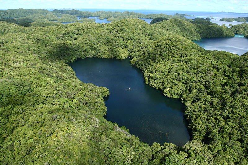 Jellyfish Lake of Palau