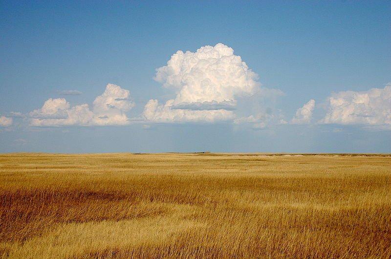 Yellow prairie in Badlands National Park, South Dakota