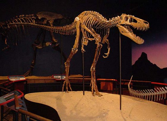 Jane T-Rex fossil at the Burpee Museum of Natural History, Rockford, Illinois