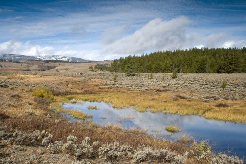 Scenery in Yellowstone National Park