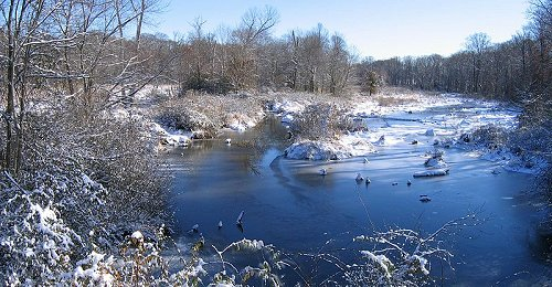 Snowy swamp in Beltsville, Maryland