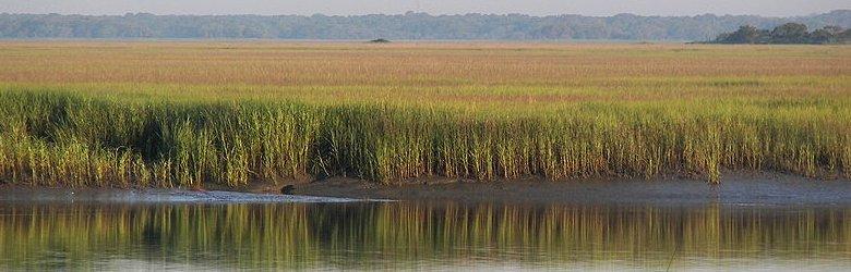 South Carolina, Hunting Island marshland, South Carolina Low Country