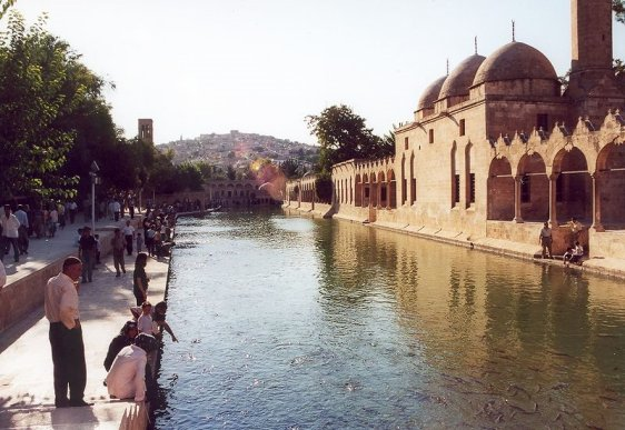 The pool with holy carps in Balıklıgöl, Şanlıurfa
