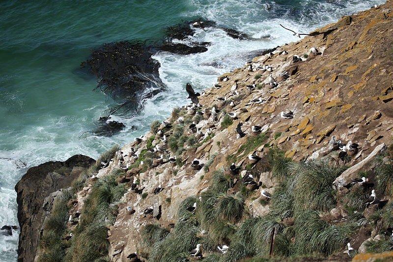 Seabirds, Saunders Island