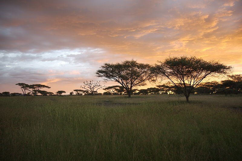 The Serengeti at sunset