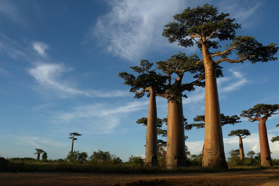 The Three Peaks, Marojejy National Park, Madagascar