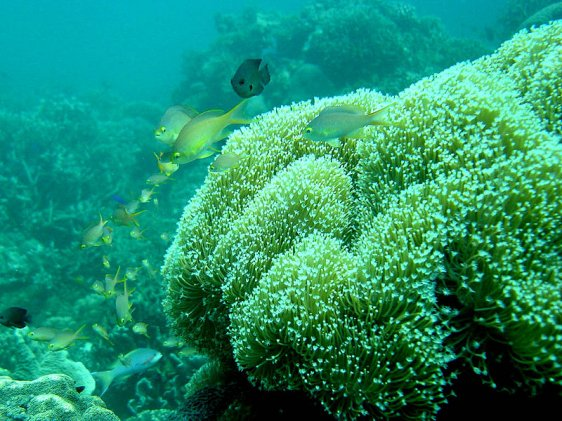 Coral reef off Moalboal, Cebu, Philippines
