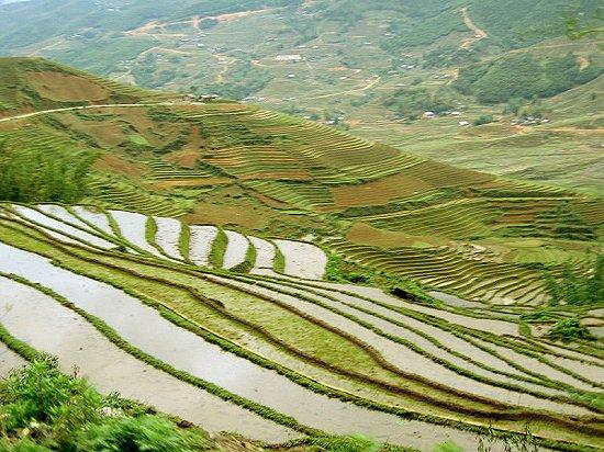 Rice terrace of Sa Pa