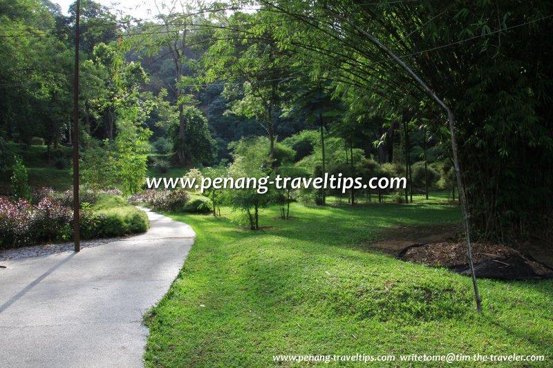 Bambusetum, Penang Botanic Gardens