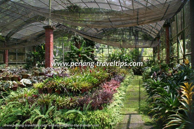 indoor gardening novice