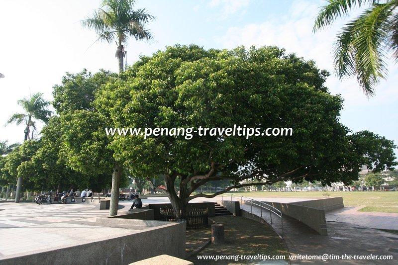The Bunga Tanjong planted by Crown Prince Akihito