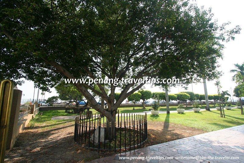 The Bunga Tanjong planted by Tun Dr Haji Hamdan, the Governor of Penang, on 26 August, 1989