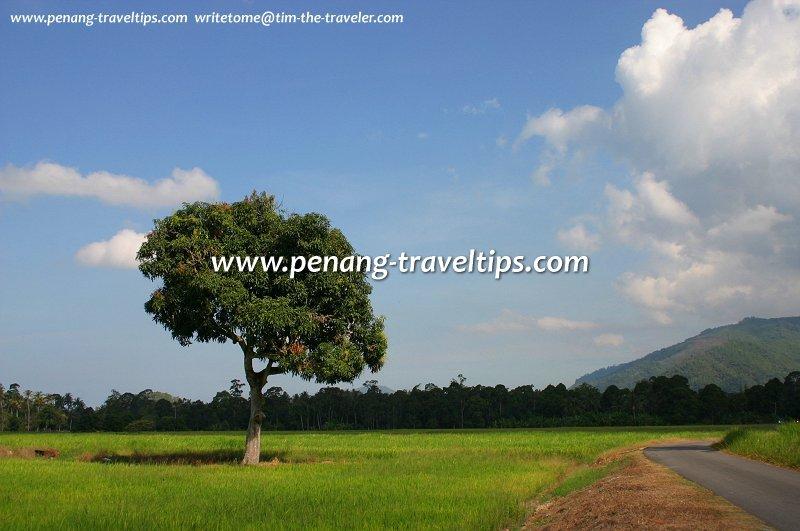 Exploring Penang