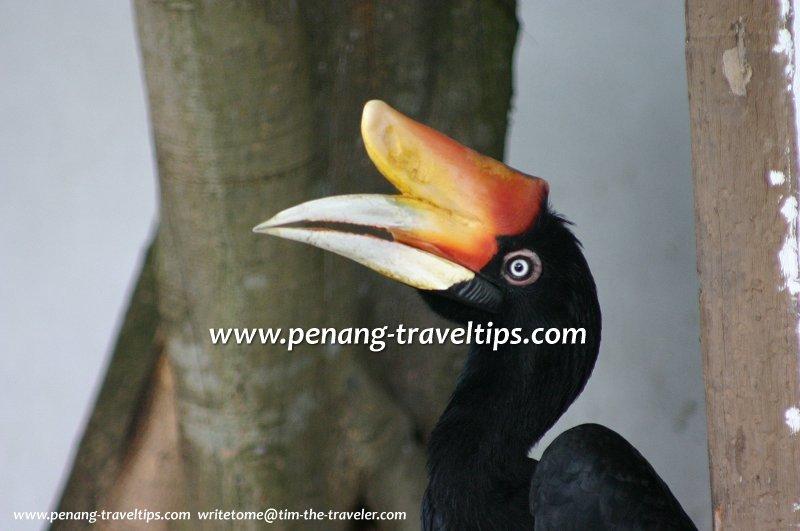 Парк птиц в Пенанге